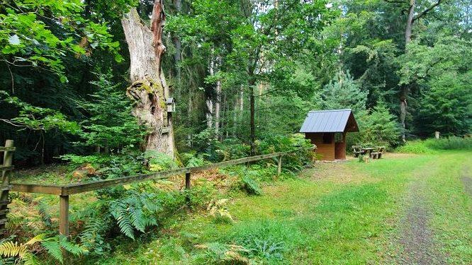 Spessartweg-3 im kühlen Wald auf Wanderung Singles-unterwegs