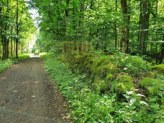 herrliche Waldwege UteStraub