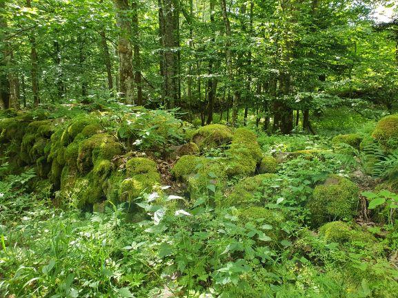 unberührte Natur Lange Rhön UteStraub