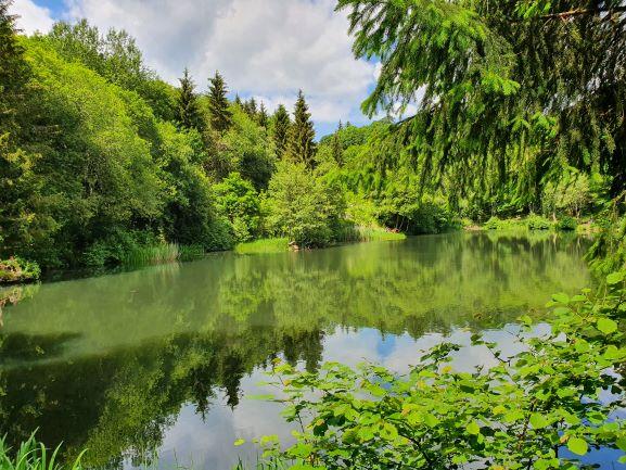 Oase der Natur am Basaltsee in der Hohen Rhön