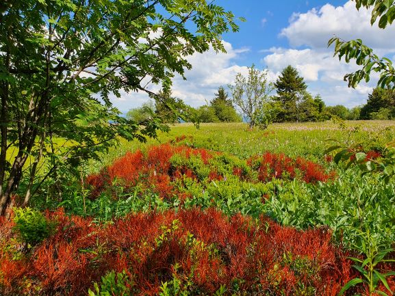 Die zauberhaften Farben der Hohen Rhön begeistern. Singles-unterwegs